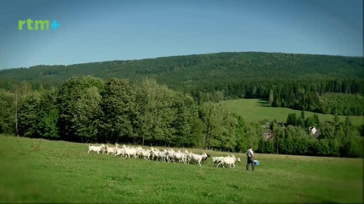 Krásy Křišťálového údolí - Kozí farma Pěnčín