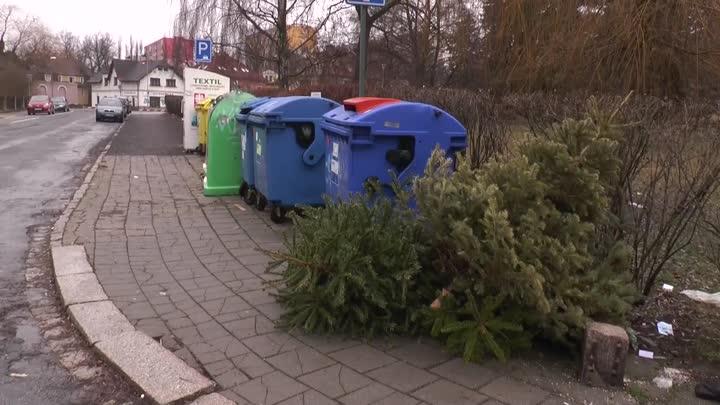 Likvidace vánočních stromků v Liberci je v plném proudu