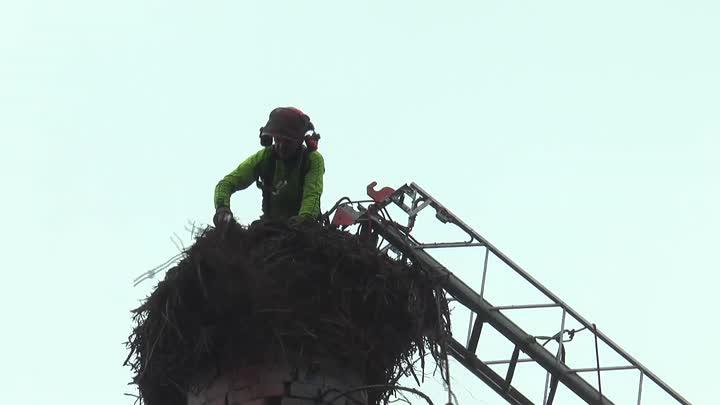 V Osečné proběhla netradiční rekonstrukce čapího hnízda